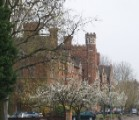 Cherry blossom outside Selwyn College